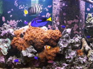Aquariums Provide Health Benefits In Addition to Beauty