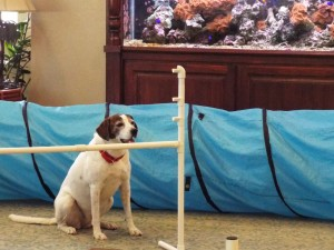 Alice The Thinking Dog Visits Assisted Living